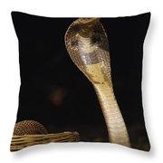 Spectacled Cobra Gujarat India Throw Pillow