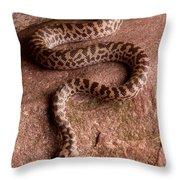 Spotted Python Antaresia Maculosa Throw Pillow