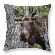 Spring Bull Throw Pillow