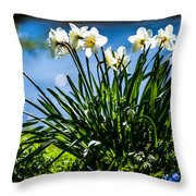 Spring Daffodils. Park Keukenhof Throw Pillow by Jenny Rainbow