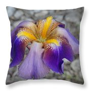 Spring Iris Throw Pillow