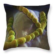 Streptococcus Pneumoniae Throw Pillow