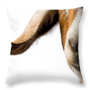 Studio Portrait Of A Mixed-breed Goat Throw Pillow