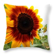 Sunflower  Beauty Throw Pillow