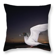 Swallow-tailed Gull Departs At Dusk Throw Pillow