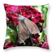 Sweet William Named Sooty Throw Pillow