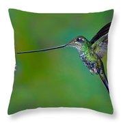 Sword-billed Hummingbird Throw Pillow