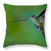 Sword-billed Hummingbird Throw Pillow