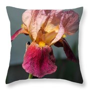 Tall Bearded Iris Named Indian Chief Throw Pillow