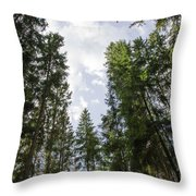 Tall Spruce Trees Throw Pillow