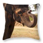 Temple Elephants Maharaja's Palace India Mysore Throw Pillow