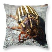 Ten Lined June Beetle Throw Pillow