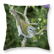 Tennessee Warbler Throw Pillow