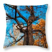 Texture Of The Bark. Old Oak Tree Throw Pillow