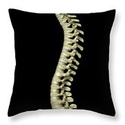 The Cervical Vertebrae Throw Pillow