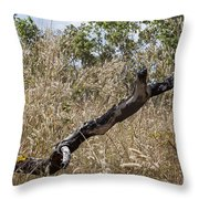 The Death Of A Tree V5 Throw Pillow