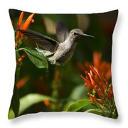 The Hummingbird Hover  Throw Pillow