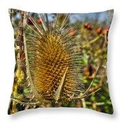 Thistle On Sunny Autumn Day Throw Pillow