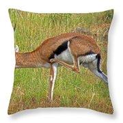 Thomson's Gazelle Throw Pillow