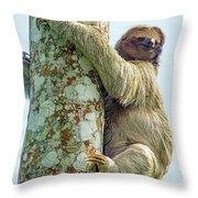 Three-toed Sloth Bradypus Tridactylus Throw Pillow
