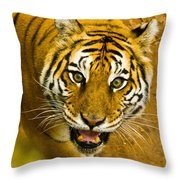 Tiger Stare II Throw Pillow
