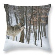 Timber Wolf In Winter Throw Pillow