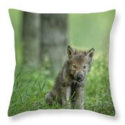 Timber Wolf Pup Throw Pillow