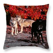 Timber Wolves Under  A Red Maple Tree Throw Pillow