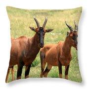 Topi Antelope Throw Pillow