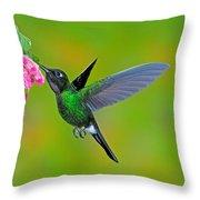 Tourmaline Sunangel Hummingbird Throw Pillow