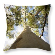 Towering Tree Trunk Throw Pillow