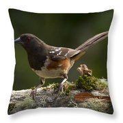 Towhee Throw Pillow