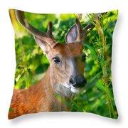 Trophy Buck In Velvet Throw Pillow