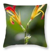 Tropical Flower 6 Throw Pillow