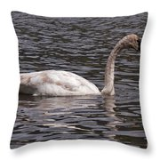 Trumpeter Swan Throw Pillow