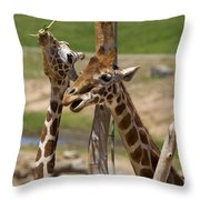 Two Reticulated Giraffes  - Giraffa Camelopardalis Throw Pillow