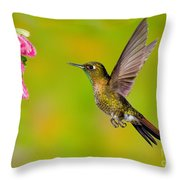 Tyrian Metaltail Hummingbird Throw Pillow