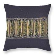 Ulothrix Sp. Algae, Lm Throw Pillow