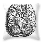 Vesalius: Brain Throw Pillow