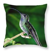 Violet Sabre-wing Hummingbird Throw Pillow by Michael and Patricia Fogden