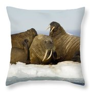 Walruses Resting On Ice Floe Throw Pillow