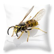 Wasp Isolated  Throw Pillow