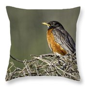 Watchful Eye Throw Pillow