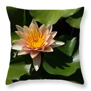 Exotic Colors - A Soft Coral Waterlily Throw Pillow