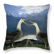 Waved Albatross Courtship Dance Throw Pillow by Tui De Roy