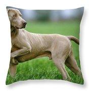 Weimaraner Dog Throw Pillow