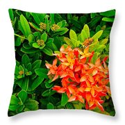 West Indian Jasmine In Sukhothai Historical Park-thailand Throw Pillow