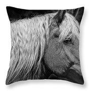 Western Horse In Alberta Canada Throw Pillow
