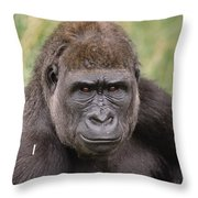 Western Lowland Gorilla Young Male Throw Pillow