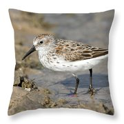 Western Sandpiper Calidris Mauri Throw Pillow